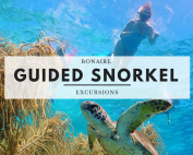 Bonaire Guided Snorkel Excursions