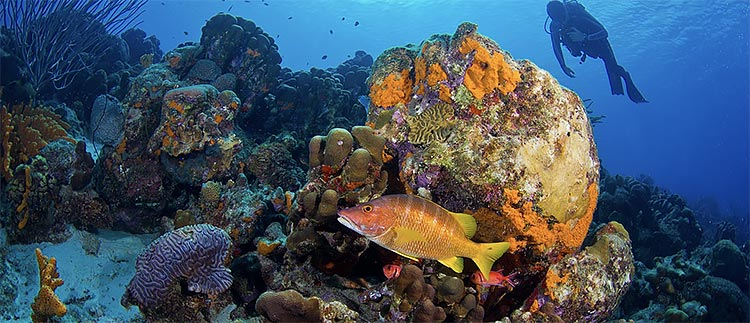 Bonaire Marine Park Fee Increase
