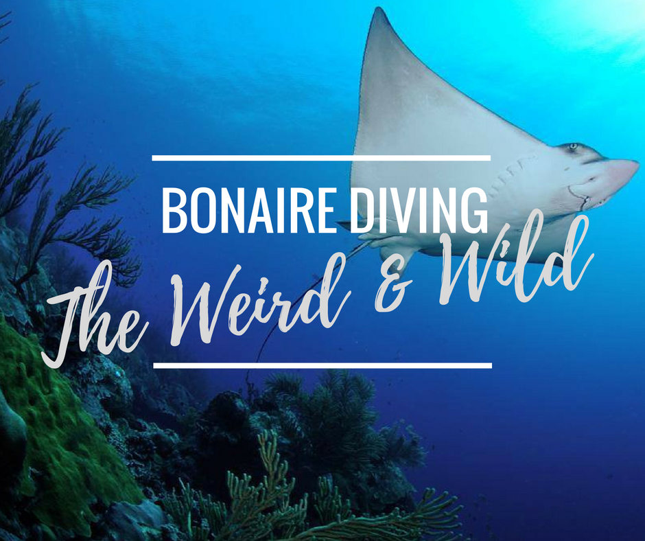 Bonaire diving - the weird and wild