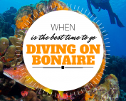 When best time diving bonaire