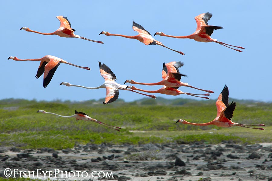 flying flamingoes ii by - photo #16